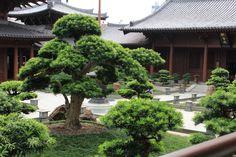 jardim budista