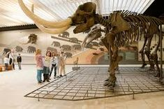 Das Senckenberg Naturmuseum ist eines der großen Naturkundemuseen in Deutschland und zeigt die heutige Vielfalt des Lebens (Biodiversität) und die Entwicklung der Lebewesen (Evolution) sowie die Verwandlung unserer Erde über Jahrmillionen hinweg. Neue Forschungsergebnisse aus allen Bereichen der Biologie, Paläontologie und Geologie werden vorgestellt.  Sonderausstellungen zu wechselnden Themen, Vorträge und Events ergänzen neben dem museumspädagogischen Programm die Dauerausstellung des…