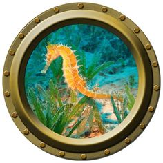 Orange Sea Horse Porthole Wall Decal by WilsonGraphics on Etsy, $13.00