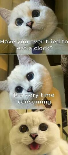 Picture # 278 collection funny animal quotes pics) for June 2016 – Funny Pictures, Quotes, Pics, Photos, Images and Very Cute animals. Funny Animal Jokes, Funny Cat Memes, Cute Funny Animals, Funny Animal Pictures, Cute Cats, Funny Images, Funniest Jokes, Funny Art, Funny Kitties