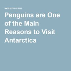 Penguins are One of the Main Reasons to Visit Antarctica