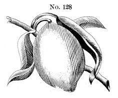 Lemon No. 128
