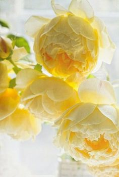 Yellow flowers​ always make me happy so yellow peonies is absolute bliss!