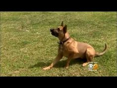 Adorable hummingbird refuses to leave Rex the dog that rescued her - YouTube