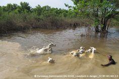 Liebe Tierfreundin, lieber Tierfreund, eine katastrophale Flut in Malawi, die in den Medien hierzulande bisher keine Beachtung fand, hat die Menschen und Tiere Anfang dieses Jahres schwer getroffen. Mitarbeiter unserer malawischen Partnerorganisation...