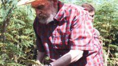 Una coltivazione a cui perfino Fidel Castro tiene molto: sarebbe il segreto della sua cura, racchiuso nelle foglie verdi ricche di vitamine, proteine, minerali