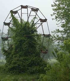 let's discover grown-over ferris wheels together