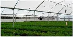 Sustainability | Free Full-Text | Potential of Vertical Hydroponic Agriculture in Mexico | HTML Stevia, Hydroponics System, Agriculture, Utility Pole, Sustainability, Mexico, Free, Flooring, News