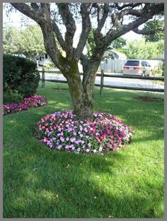 A simple garden bed of mixed color impatiens is the perfect compliment to the base of an old dogwood tree