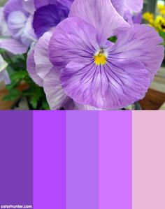 Shades Of Purple Color Scheme