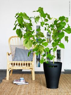 9 IKEA Budget-Friendly Decor Updates for the New Year! Tulips always brighten up a space from bedside to the kitchen table - and what an affordable way to freshen up a room for the new Ikea Plants, Indoor Plants, Pots, Love Your Home, Beautiful Interior Design, Plant Decor, Decoration, Home Furnishings, Greenery