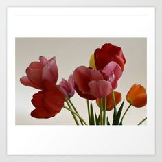 Collect your choice of gallery quality Giclée, or fine art prints custom trimmed by hand in a variety of sizes with a white border for framing. Tulips, Fine Art Prints, In This Moment, Gallery, Frame, Flowers, Plants, Roof Rack, Art Prints