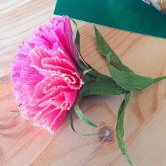 Flora Nordica (@_flora__nordica_) • Фотографије и видео записи на услузи Instagram Pink Carnations, Flora, Instagram, Plants