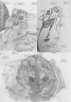 Hamsters (part of a small project) Pencil Art, Pencil Drawings, Der Computer, Hamsters, Projects, Animals, Good Photos, Photo Illustration, Children Drawing