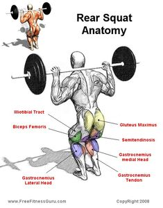 FreeFitnessGuru - Rear Squat Anatomy
