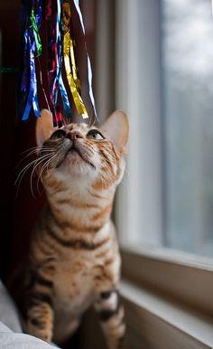 cat + birthday + whiskas + dorbs