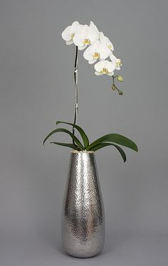 Silver Bullet - Orchid Diva, NYC