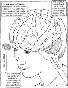 my first book about the brain dover publications