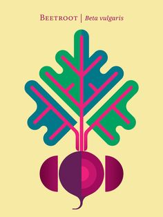 Vegetable: Beetroot Art Print by Christopher Dina