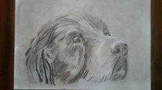 Hond pen, grafiet, pastelpotlood
