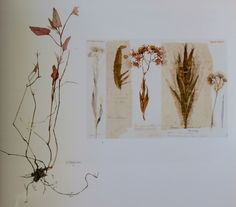 Fen ragwort by Victoria Crowe, Scotland UK Collage Art Mixed Media, Sketchbook Pages, Panel Art, Natural Forms, Botanical Art, Botany, Scotland Uk, Victoria, Landscape