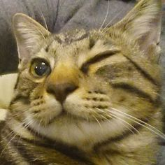 横顔が魅力的なルナちゃん@rakamille010gt さんのところからバトンを拾ってきました🎶 #oneeyechallenge 膝の上の😸りくと自撮りしようとしたらウインクしてた😸  Please join us the challenge fun 🎵  #きじとら#キジトラ#にゃんすたぐらむ#にゃんとかめら#猫のいる暮らし#保護猫#猫のいる生活#やんちゃ猫#猫好きさんと繋がりたい#ネコ#猫#ねこ#にゃんこ#愛猫#愛猫家 #catsofinstagrams#japanesecats#japan#chat#catsofinstagram#cats#7catdays#nyaspaper