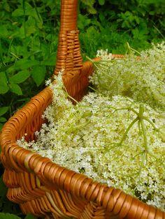 Moment to Moment: Homemade Elderflower syrup/ Hjemmelavet Hyldeblomst saft