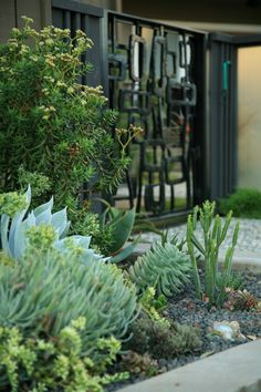 Landscape Mid Century Modern Garden Design Ideas, Pictures, Remodel, and Decor - page 12 Garden Design Layout Modern, Modern Landscape Design, Contemporary Landscape, Modern Design, Succulent Landscaping, Modern Landscaping, Succulents Garden, Landscaping Jobs, Landscaping Software