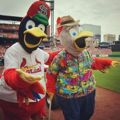 Birds of a feather. Fredbird and his dad celebrating Father's Day at the ballpark. GO CARDS!