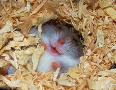 Happy hamster is happy