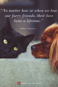 So true - a perfect sympathy quote to include in a sympathy card for someone grieving the loss of a pet.