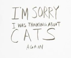 I'm always thinking about cats and actually I'm not sorry lol