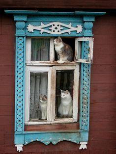 Tres gatos en la ventana ...