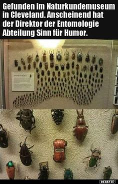 Found in the Natural History Museum in Cleveland. - Found in the Natural History Museum in Cleveland. – Found in the Natural History Mu - Funny School Pictures, Funny Sports Pictures, Funny Pix, Stupid Funny, Funny Images, Cleveland, Humor Mexicano, Funny Friday Memes, Funny Jokes
