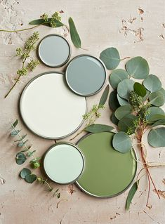This nature-inspired color palette showcases the shade in various tints ranging from almost-white to deep gray-greens. Look for green paint colors with cool gray undertones for a crisp, organic look. #greenpaint #paintpalettes #colorschemes #paintcolors #bhg Mint Green Aesthetic, Aesthetic Colors, Paint Colors For Home, House Colors, Green Colors, Colours, Color Palette Green, Deco Nature, Colour Board