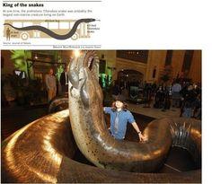 멸종한 타이탄보아뱀의 모습