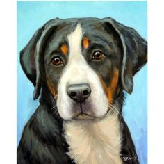 Greater Swiss Mountain Dog Art 8x10 or 11x14 Print by DottieDracos, $12.00