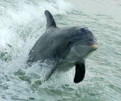 Dolphin Fun (Dol-Fun)