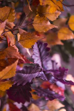 Autumn leaves in the English forest. Our new collection, The English Oak, encapsulates the spirit of that magical place in all its glory. Orange Leaf, Orange And Purple, Orange Color, Autumn Leaves, Color Inspiration, Earthy, English, Nature, Plants