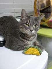 This taco would also make a tasty key chain. Taco cat toy. Catnip optional....NOT!
