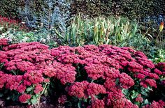 Sedum 'Herbstfreude' would be another neat winter plant - it blossoms in the fall and the blossoms change colors as the season progresses.