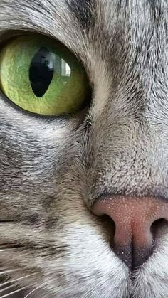 Cats And Kittens Kitty Baby Faces 47 Best Pretty Cats, Beautiful Cats, Animals Beautiful, I Love Cats, Crazy Cats, Cool Cats, Cute Baby Animals, Animals And Pets, Bb Chat