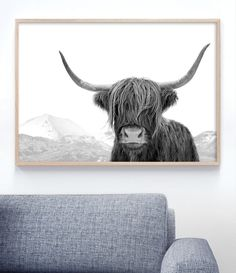 Black And White Highland Cow Art Print | Black and White Prints | Black and White Interior Decor. Wall Art by Little Ink Empire Australia. Click on image to adopt this gorgeous guy! #blackandwhiteprints #largewallart #blackandwhitephotography