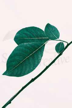 Items similar to Printable Botanical Photography, Willow Tree Branch on Etsy Tree Photography, International Paper Sizes, Willow Tree, Tree Branches, Poster Size Prints, Printing Services, Plant Leaves, Branch Art, Printables