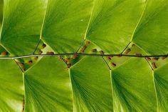 Naturaleza Geométrica. Escalera de Hojas