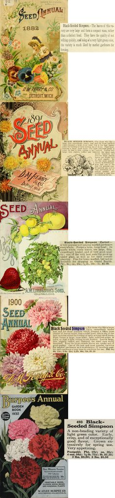Heirloom lettuce seeds, still sold today by Burpee, are traced back to 1882 on this site. Read catalogs from history, and then plan on planting this lettuce in your organic garden this year!