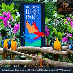Jurong Bird Park is shelter of more than 400 species of Birds which attracts lots of traveler. Get Discount on Tickets on Galaxy Tourism.  Read More:- http://goo.gl/wHZUh9