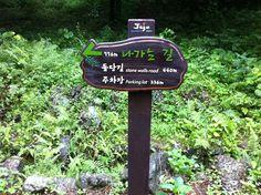Pyengdaeri Japanese nutmeg forest of Jeju(제주 평대리 비자림)