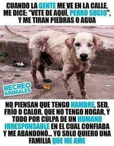 Animals And Pets, Funny Animals, Cute Animals, Mundo Animal, Animal 2, I Love Dogs, Cute Dogs, Planeta Animal, Human Kindness