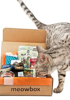 meowbox is a monthly cat subscription box filled with fun unique toys and healthy goodies. Treat your cat with meowbox.